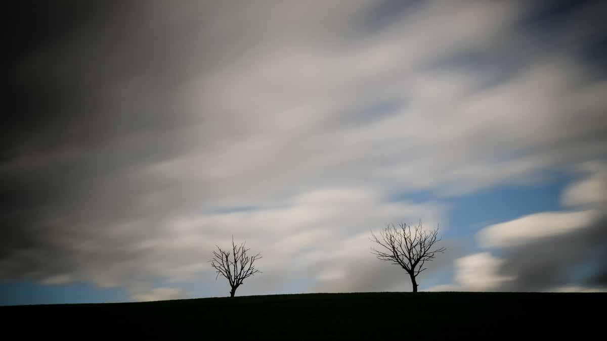 Die toten Bäume von Lascheid