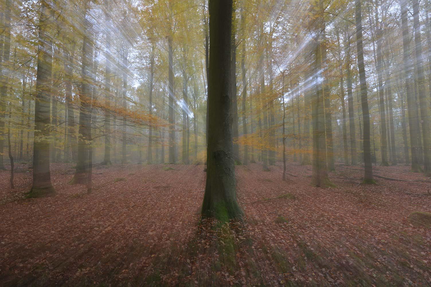 Geisterwald