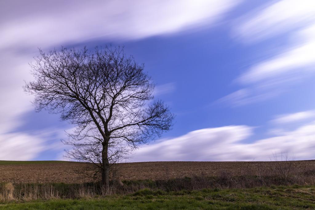 Der Wolkenfängerbaum
